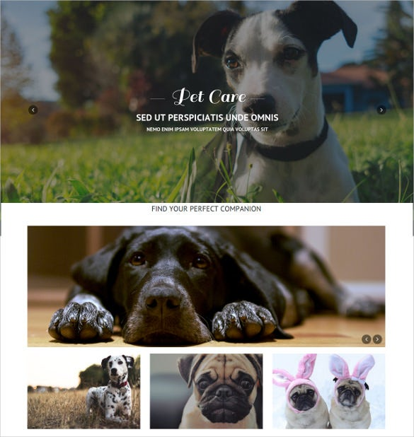 animal pet care responsive one page psd theme 12