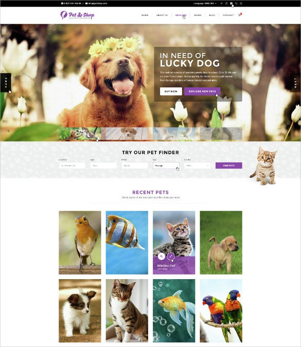 animal pet care psd template 12