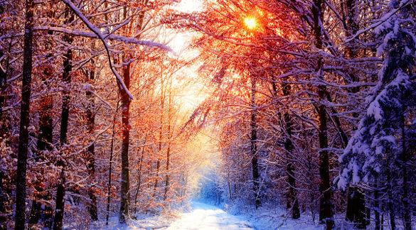 forest winter wallpaper download