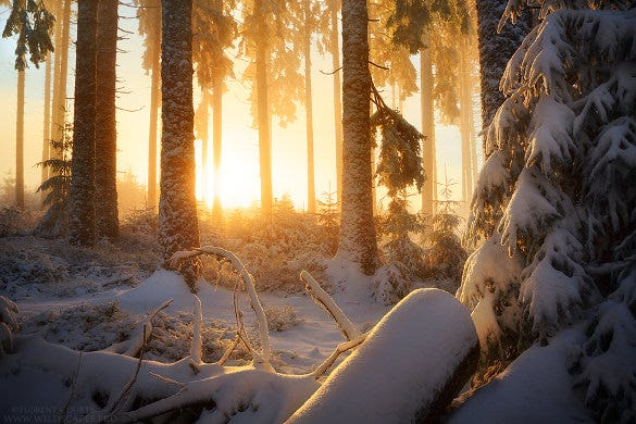 cute winter wallpaper download