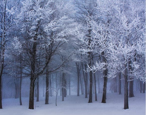 dark forest winter wallpaper download