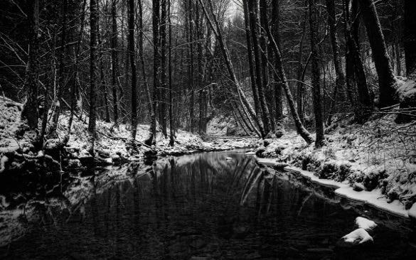 black forest winter wallpapers download