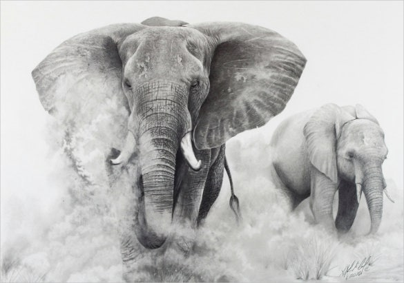 Original pencil drawing elephants in the dust