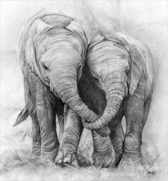 Elephant couple pencil drawing