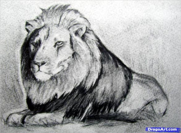 hungry lion drawing