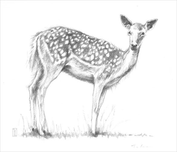 easy to draw deer