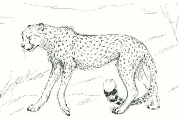 simple cheetah drawing