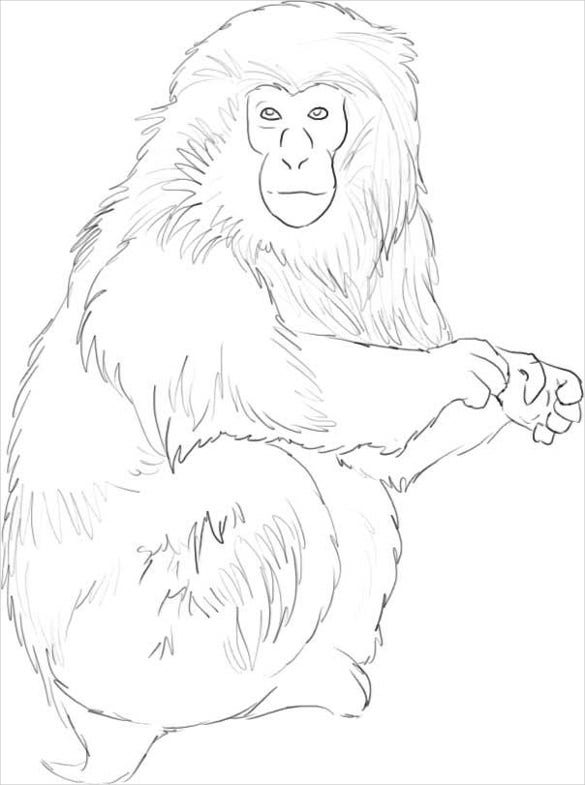easy to draw monkey