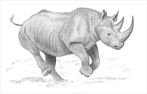 unique rhinoceros drawing