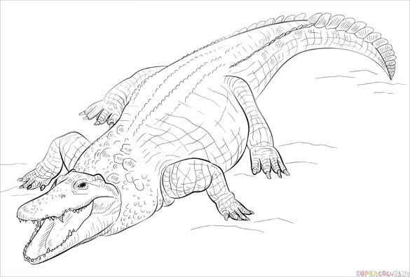 hungry crocodile drawing
