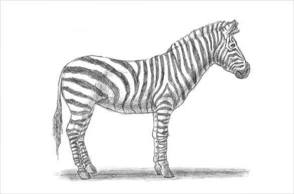 easy to draw a zebra drawing