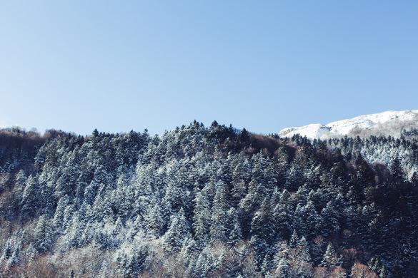 texture of winter forest wallpaper