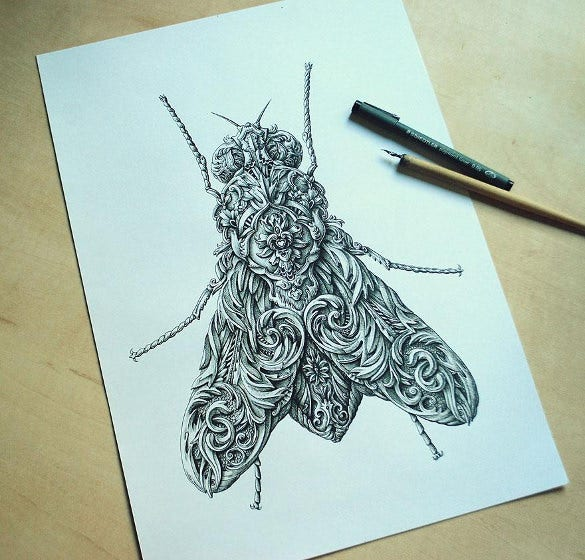 unique drawing of fly