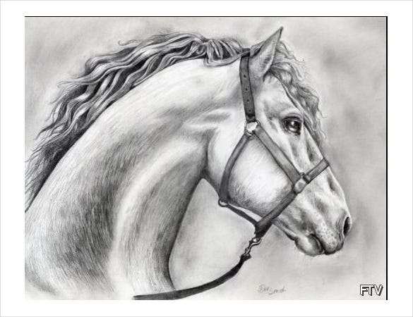 awesome drawing of a horse