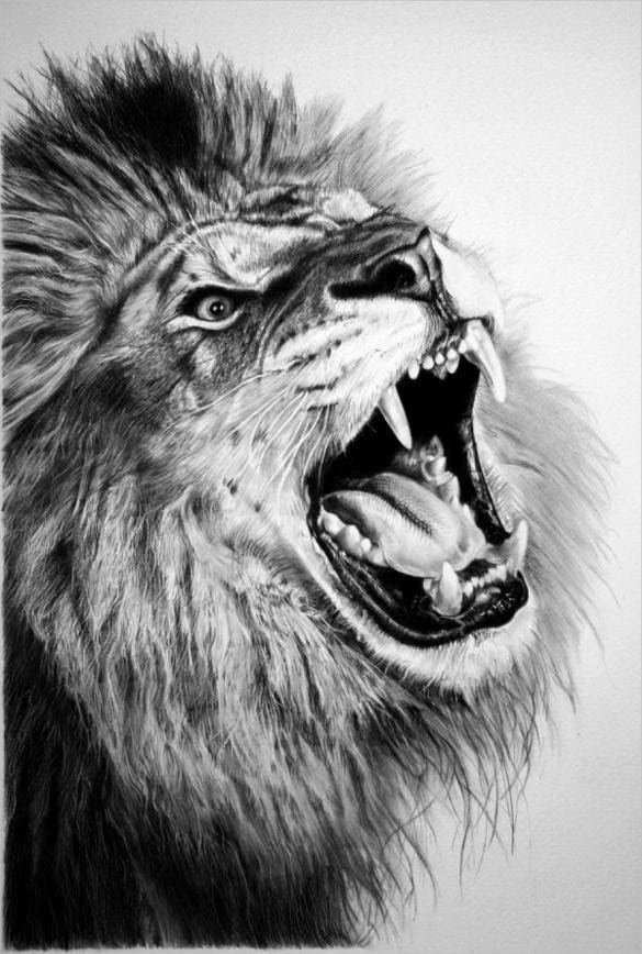 awesome drawing of a hungry lion