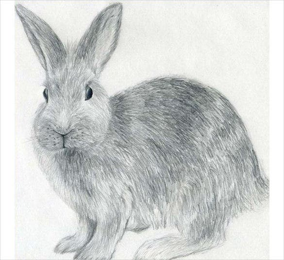 awesome drawing of rabbit