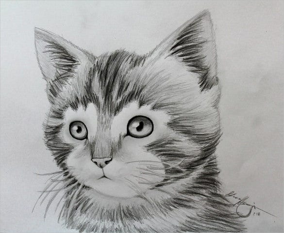 awesome drawing of kitten