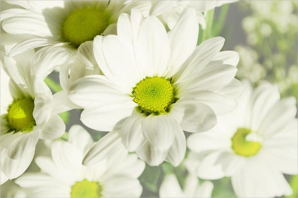white colored flower background for download