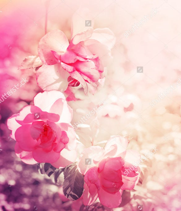 baby pink colored flower background for download
