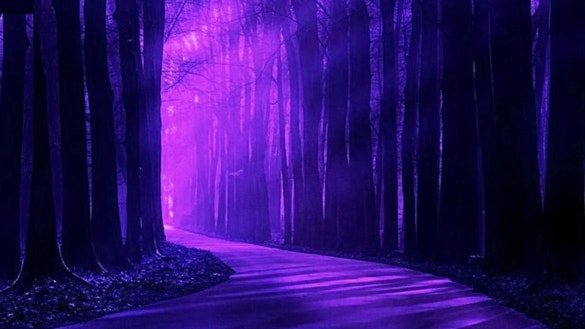 purple forest light background download