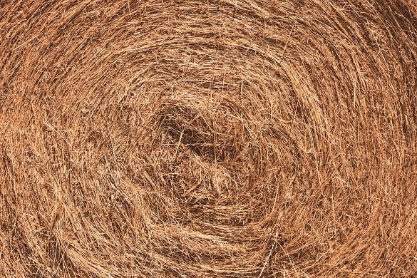 dry grass texture for download
