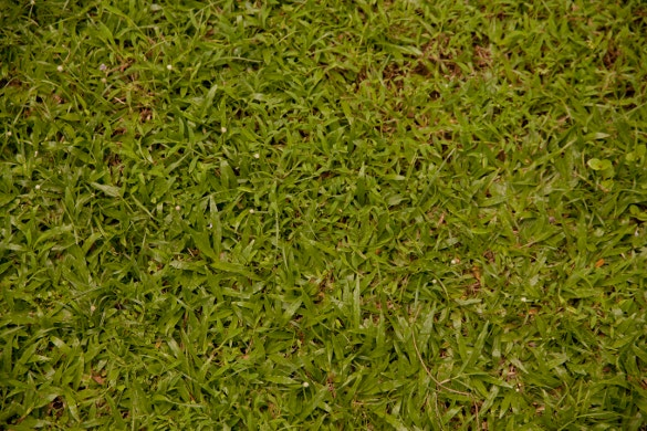 light grass texture for download