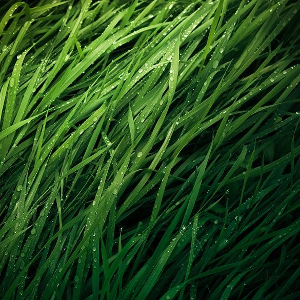 long grass texture for download