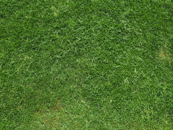 short grass texture for download