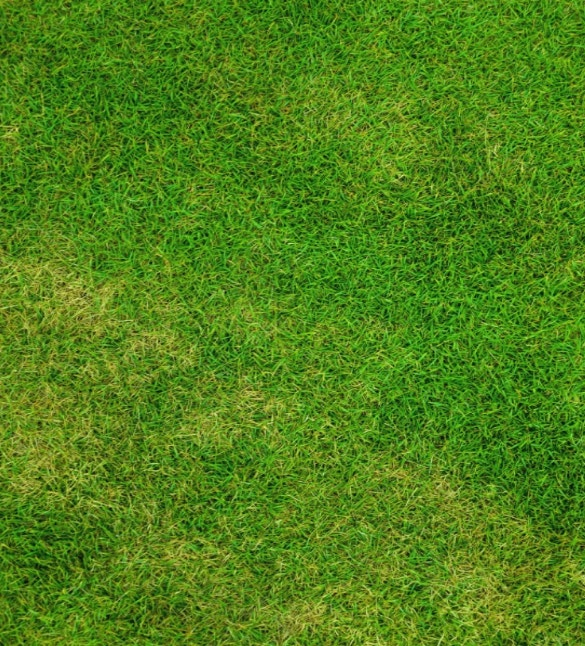 beautiful grass texture for download