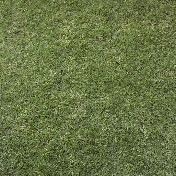 light green grass texture for download
