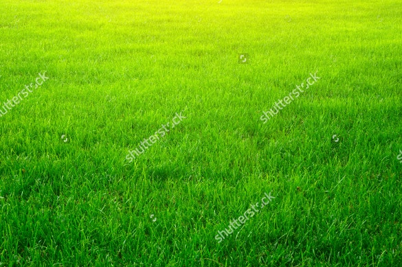 specially designed grass texture for download