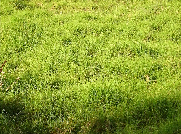 easily download grass texture for download
