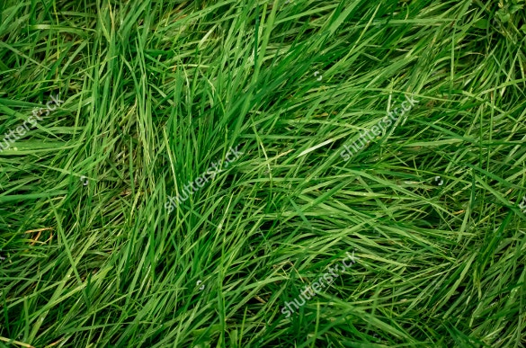 thick green grass texture for download