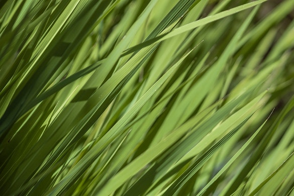extra ordinary grass texture for download