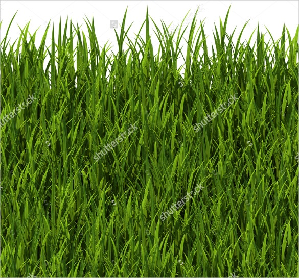 long and short grass texture for download