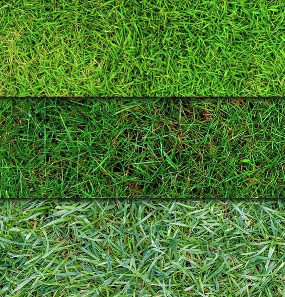 tall grass texture seamless. 6 Seamless Grass Textures Tall Texture