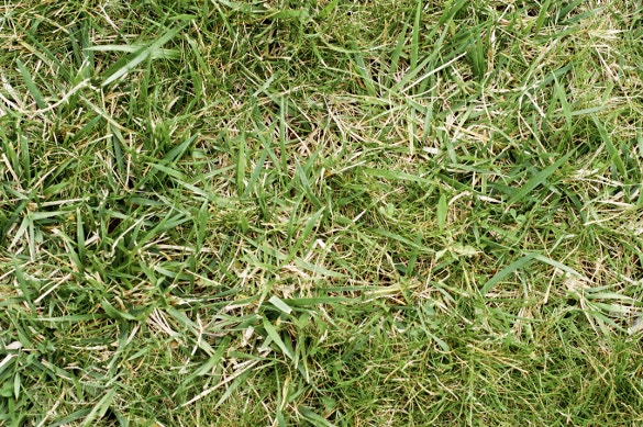 dull grass texture for download