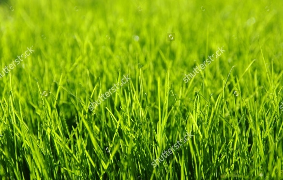 simple green grass texture for download