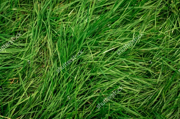 cut over grass texture for download