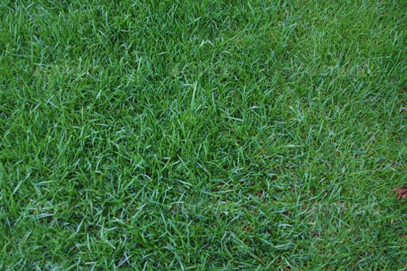 easy to download grass texture
