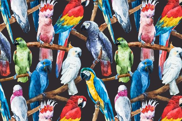 watercolor set of parrots vector artwork download