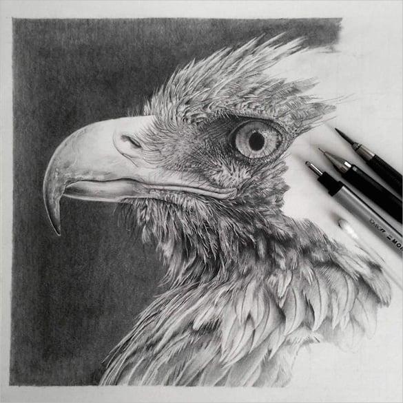 eagle cool art