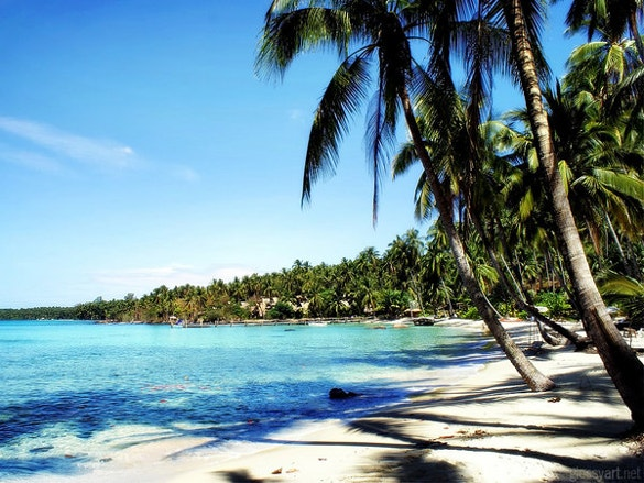 beach wallpaper with trees for download