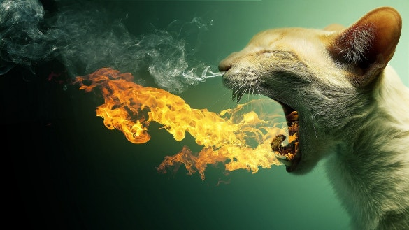 burning breath of cat funny hd wallpaper download