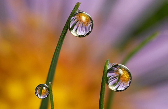 daisy dewdrop refraction awesome photography