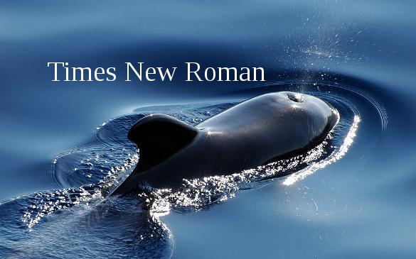 Time New Roman