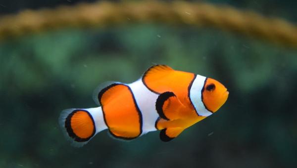 fishlogos