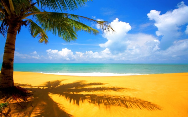 Blue Beach With Coconut Tree Background Download