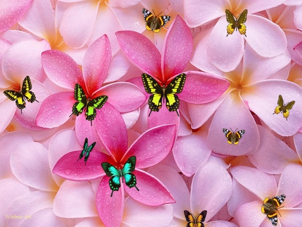 Butterfly Cute Girly Wallpapers Download