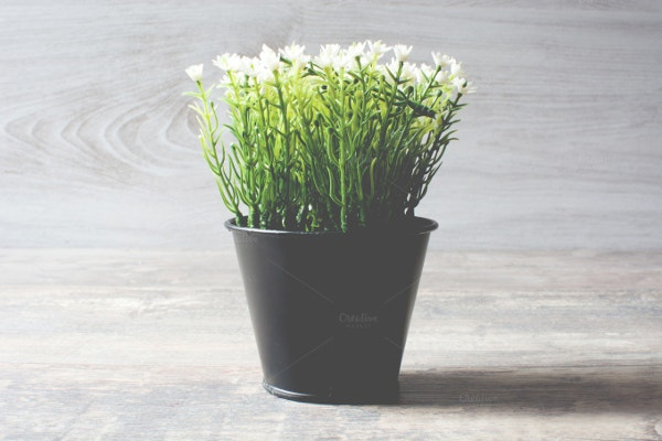 Plant With White Flowers Background